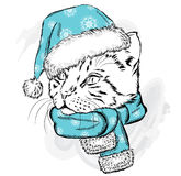 Funny cat in a Christmas hat and scarf. Royalty Free Stock Image