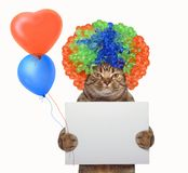 Cat in a wig holds a blank sign and balloons