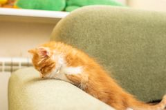 Funny cat in a cozy home royalty free stock photography