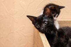 Funny cat in a cozy home stock images