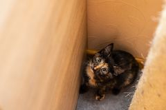 Funny cat in a cozy home royalty free stock images