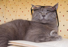 Funny cat with eyeglasses. Over a book stock photos