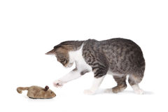 Funny Cat and Fake Mouse Stock Photos
