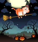 Funny cat flies on a broomstick Royalty Free Stock Image