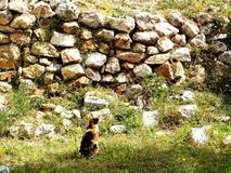 Funny cat gazes at a wall. stock photography