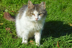 Funny cat on the grass Royalty Free Stock Photo
