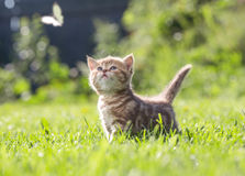 Funny cat in green grass looking at butterfly Stock Photography
