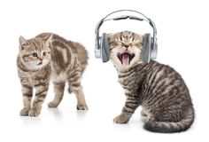Funny cat in headphones listening music and another cat is shocked by this. Isolated on white stock photos