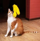 Funny cat at home royalty free stock photos