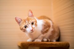Funny cat at home royalty free stock images