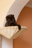 Funny Cat In A Basket Royalty Free Stock Photography
