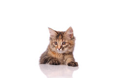 Funny cat isolated over white Stock Image