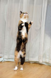 Funny cat jumping Stock Images