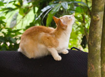 Funny cat. Funny kerala cat Royalty Free Stock Images