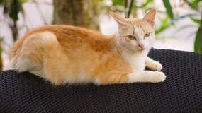 Funny cat. Funny kerala cat Stock Photo