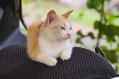 Funny cat. Funny kerala cat Royalty Free Stock Photos