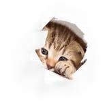 Funny cat kitten Stock Image