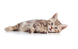Funny cat kitten lying on floor Stock Photo