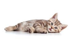 Funny cat kitten lying on floor stock photo
