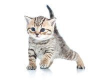 Funny cat kitten Stock Images