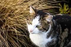 Funny cat in light color looks directly into the camera in the park in the summer on the background of leaves. Close-up. stock image