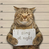 The funny cat likes to sing at night Stock Image