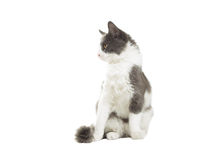 Funny cat looking in front Stock Photography