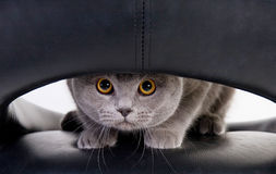 Funny cat looking through a hole stock photography
