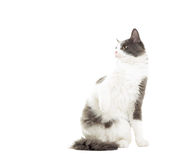 Funny cat looking Stock Images
