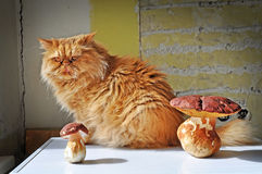 Funny cat and mushrooms Stock Photography