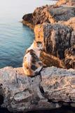 Funny cat onthe sea coast Royalty Free Stock Photo