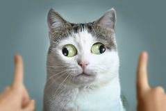 Funny cat at ophtalmologist appointmet. Squinting following doctor fingers stock photos