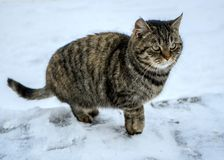 Funny cat outdoors on winter day. Lovely cat. stock photos