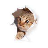 Funny cat in paper hole Stock Photography