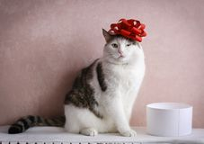 Funny cat photo sleeping in gift box with red bow on head royalty free stock photo