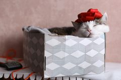 Funny cat photo sleeping in gift box with red bow on head stock image