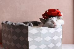 Funny cat photo sleeping in gift box with red bow on head royalty free stock image