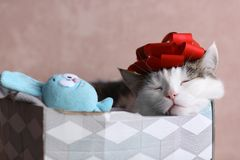Funny cat photo sleeping in gift box with red bow on head stock images