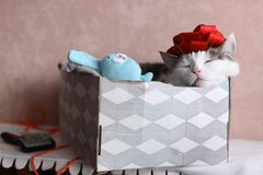Funny cat photo sleeping in gift box with red bow on head royalty free stock images