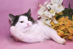 Funny cat Stock Images
