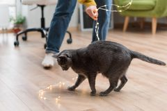 Funny cat playing with garland. Russian blue cat with Christmas lights, selective focus. Royalty Free Stock Images