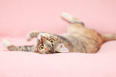 Funny cat playing on pink background Stock Photos