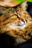 Funny cat portrait stock photos