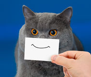 Funny cat portrait with smile. On card Stock Photos