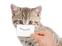 Funny cat portrait with smile on cardboard Royalty Free Stock Image