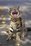 Funny cat Royalty Free Stock Image