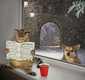 Cat reading a newspaper on the sill 2 royalty free stock photos
