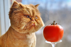 Funny cat and red tomato. Funny cat with grooming sitting on the window next to a large red tomato. Cat looking out the window and dreaming