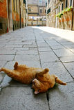 Funny cat relaxing in a typical Venice Calle Stock Photo