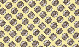 Funny cat`s heads on yellow background. Fashion art collage pattern. Funny low polygonal cat`s heads on yellow background. Fashion art collage pattern Royalty Free Stock Images